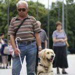 Egy férfi fehér bottal közlekedik a téren, egy golden retreiver vakvezető kutya vezeti őt.