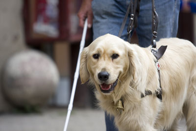 I will be my master's eyes from now on and I will ensure freedom for them. In return, they will look after me. Should we have any questions or problems in the future, we will contact the Baráthegyi hungarian Guide Dog Foundation.