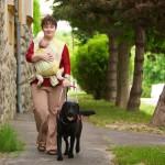 Egy hölgy megy a járdán. Maga előtt hordozókendőben egy csecsemőt hordoz. Egy fekete labrador vakvezető kutya irányítja.