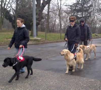 Közös gyakorlás  kutyákkal kiképzőik