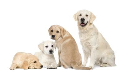 A kutya ápolása, gondozása, cuki vakvezető kutyák kicsik és nagyok