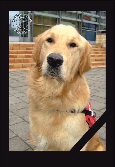 Rusty, the loyal guide dog was poisoned at the peak of his carrier