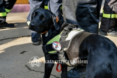 Delta the specially trained dog of Baráthegyi Guide Dog School  in action