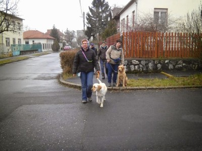 In the picture one of the trainers is going through on the road with her yellow labrador. Behind her the other trainer is standing with her sitting yellow labrador on the sidewalk..