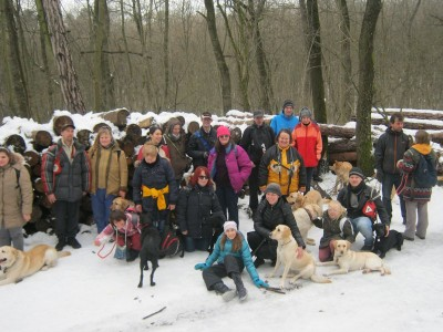 In the picture there is a big group of people standing with their guide dogs. The dogs are yellow and black labradors.