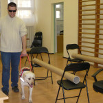 In the picture we can see Bodza, the yellow guide-dog-in-training  and Zoli, our experienced specialist practicing together for the exam in a room equipped with artificial obstacles.