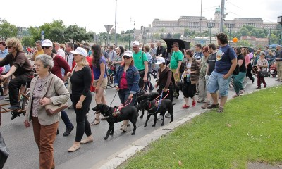 In the picture there are two visually impaired women marching in the crowd with two black guide dogs. Behind them there are two men also with black guide dogs.