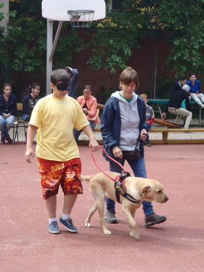 There is a blindfolded boy in the picture led by Zorien, the yellow Labrador. On the other side of Zorien there is his trainer walking.