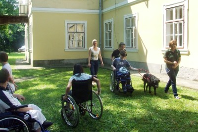 In the picture there is a boy in a wheelchair guided by a black Labrador. The wheelchair is pushed from behind.