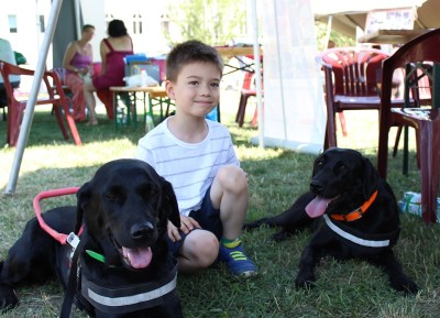 There is a little boy in the picture crouching between two black Labradors in harness.