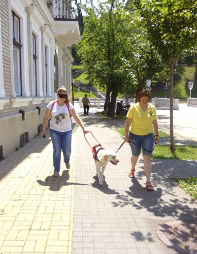 A yellow Labrador is leading a blindfolded woman in the picture. The trainer is holding the dog's leash.