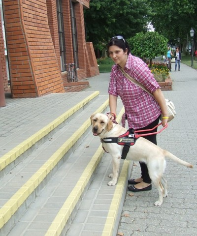There is a yellow Labrador in the picture in harness with a woman. The front legs of the Labrador are on the first step while the woman is stroking her head.