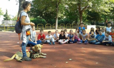 In the picture a lady is talking in the schoolyard. A yellow Labrador is lying by her legs in harness and children are sitting in front of her in a half circle.