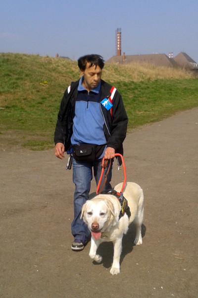 In the picture a man is being guided by a yellow Labrador.