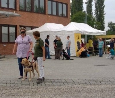 In the picture a woman is being guided by a yellow Labrador who is wearing a harness. On the other side of the dog there is her trainer.