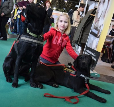 n the picture there is a girl kneeling between two black Labradors in harness. One of the Labradors is lying, the other is sitting.