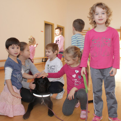 In the picture a black Labrador in harness is lying surrounded by children who caress him.