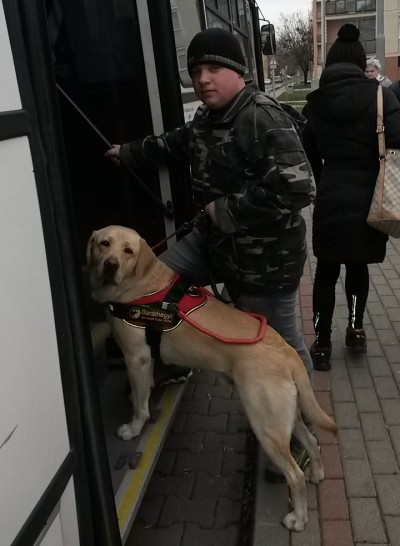 In the picture a young man is getting on the bus with his guide dog, a yellow Labrador.