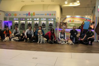 In the picture there are people squatting next to each other and in front of them there are guide dogs lying or sitting.