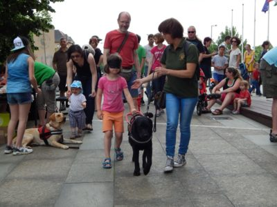 In the picture a little girl is led by a guide dog, a black Labrador. The dog's leash is held by his trainer