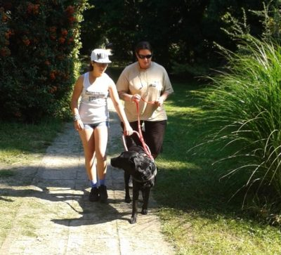 In the picture Brendon, a black Labrador, is guiding a girl. Brendon's leash is held by his trainer.