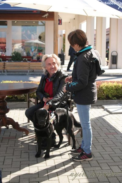 In the picture Sandor Sasvar is sitting and patting Felhő, a black Labrador, whose leash is held by her trainer.