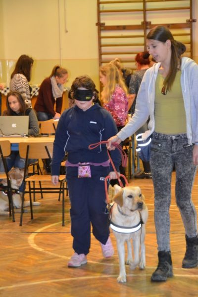 In the picture Gesztenye, a yellow Labrador is guiding a little boy. His leash is held by our colleague.