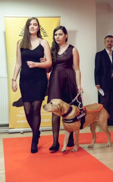In the picture Dóra is walking on the red carpet hooking on her sister and holding the leash of her yellow guide dog