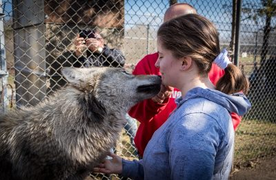 In the picture a wolf is smelling Deboras's chin. Debora is caressing the wolf's chest.