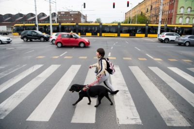In the picture Barbara is just crossing the road on the zebra crossing with her guide dog Demi.