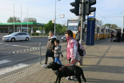 In the picture a visually impaired woman is standing at a zebra crossing with her guide dog.