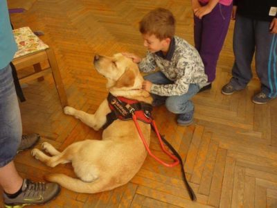 In the picture Nelson, a yellow Labrador, is lying on the ground, while a little boy is stoking his head.