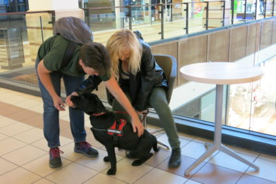 A trainer is showing a puppy raiser how to help a little black Labrador slip under a chair by touching the back of the dog