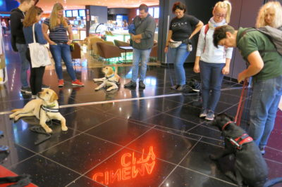 Three Labradors are practicing lying and waiting on a dark and reflective floor with their puppy raisers and trainers.