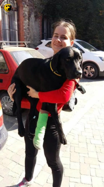 Anikó holds his injured dog, Brunó, in her hands. The enforced rest is a real punishment for such a work-loving guide dog like Brunó.