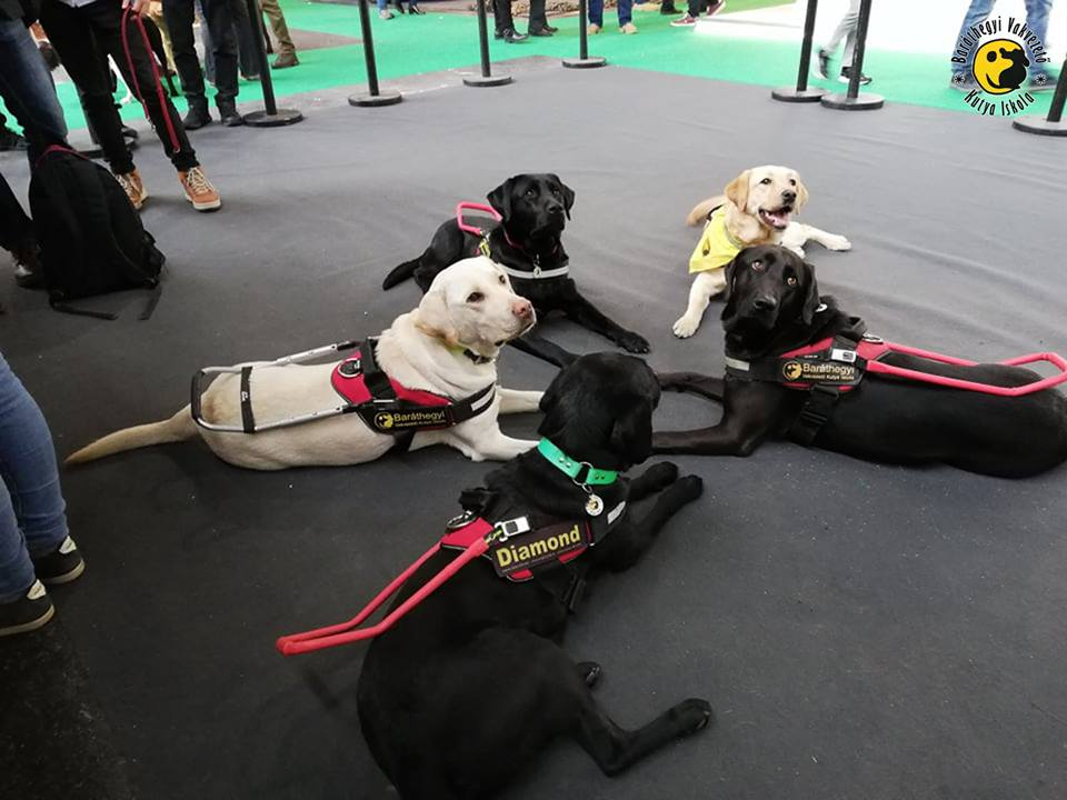 Guide dogs were a huge success at FEHOVA