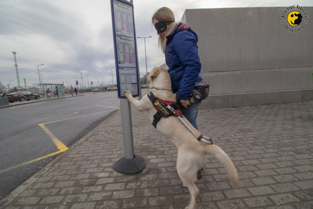 Iram jelzi kiképzőjének a buszmegállót