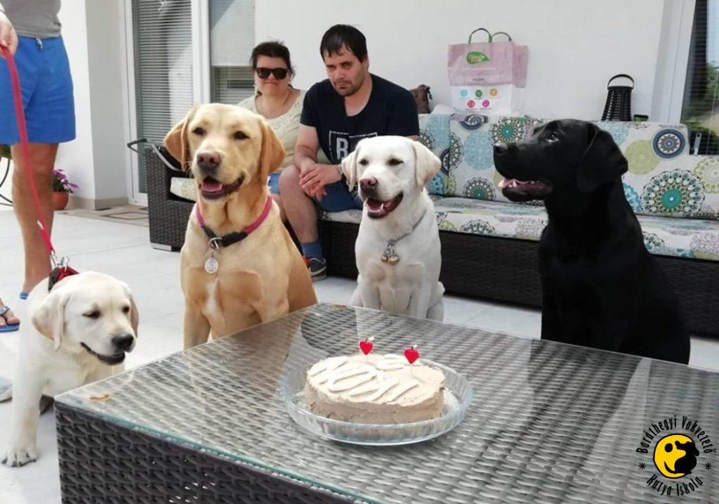 Müzli, Fidzsi and Artúr congratulated Ikon on his birthday