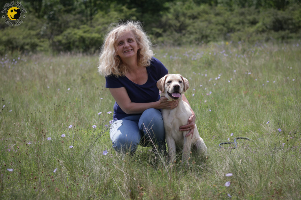 A sárga labrador, Lars és a mellette guggoló Judit a gyönyörű virágos mezőn