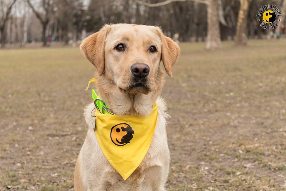 Kiwi a sárga baráthegyis kendőben pózol