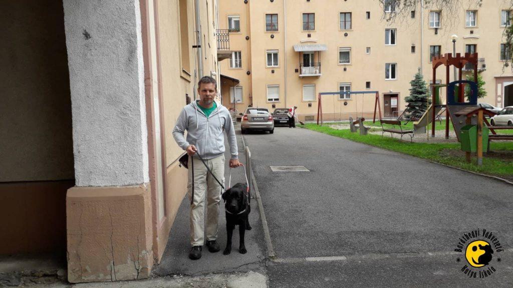 Kiképzőnk, Cserven Lajos Karmával gyakorolja a hámban való közlekedést